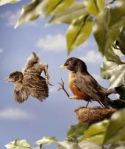 Adriennes blog 5 bird flying pic